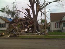 damaged tree.