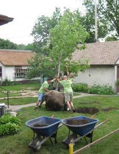 planting new tree.