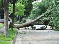 Fallen tree on car.