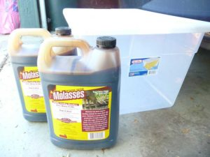 jugs of molasses