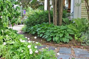 photo of hostas and ferns