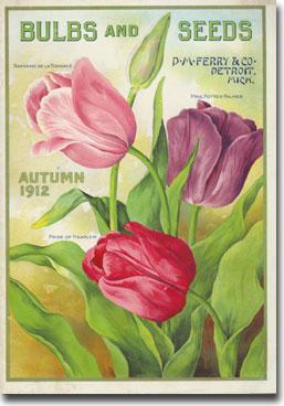 1912 Tulip Catalog.